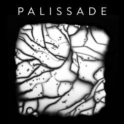 Palissade - Palissade - LP...